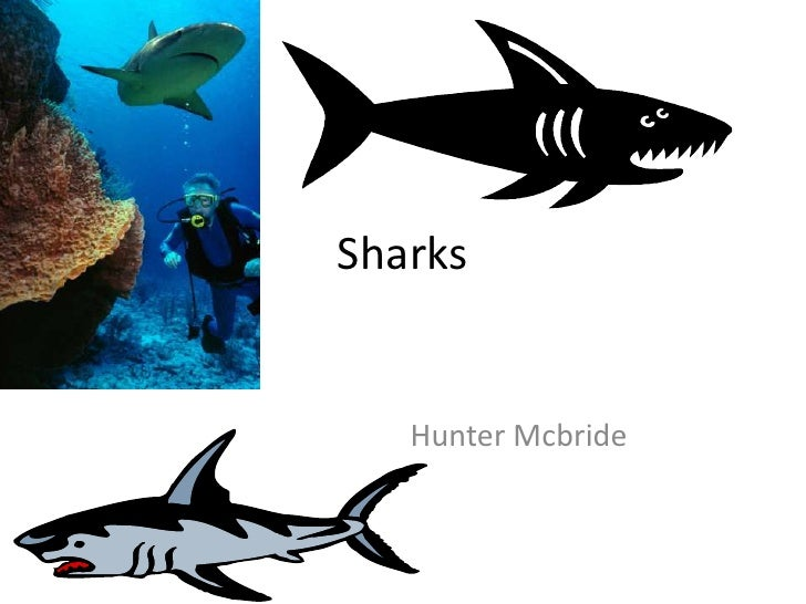 Sharks<br />															 Hunter Mcbride<br />