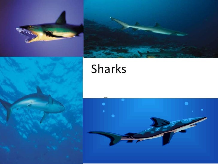 Sharks<br />By,<br />CambrieCurrence<br />