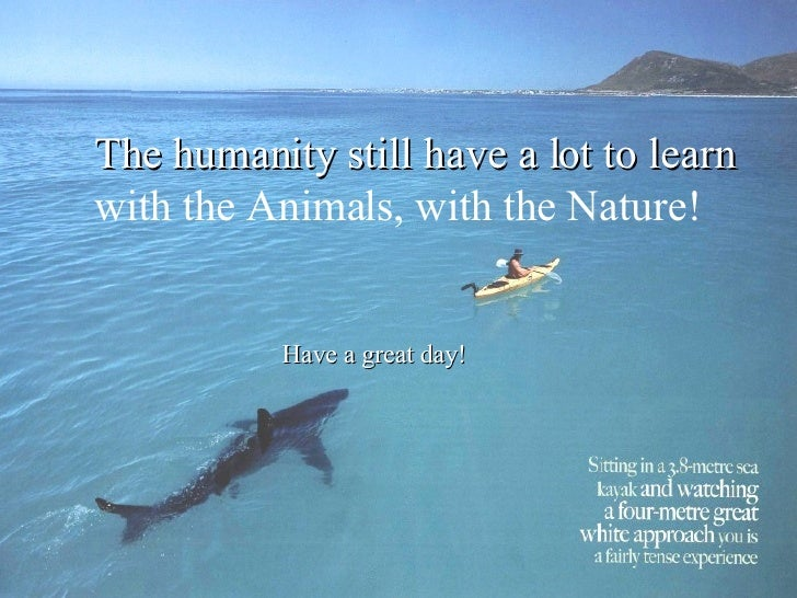 The humanity still have a lot to learn with the Animals, with the Nature! Have a great day!