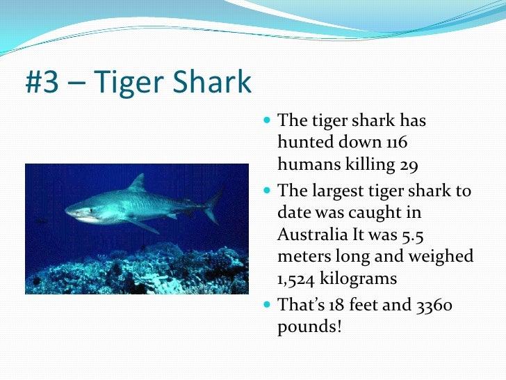 Sharks Power Point