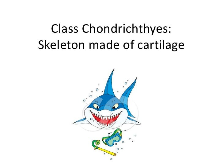Class Chondrichthyes:Skeleton made of cartilage