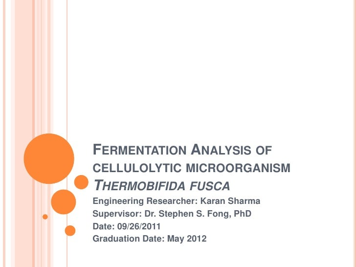 Quantitative analysis of the fermentative metabolism