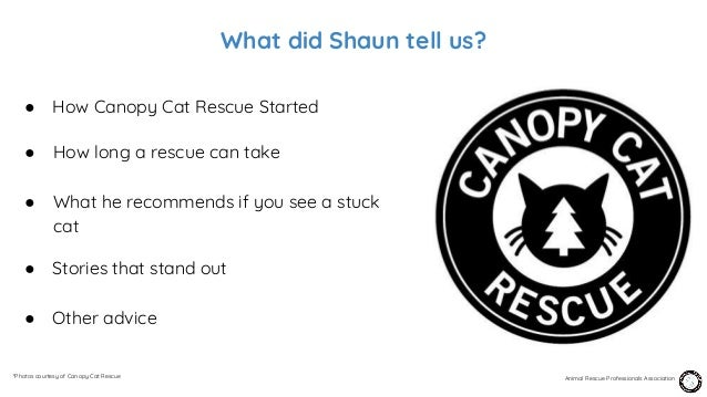 episode 20 shaun sears canopy cat rescue