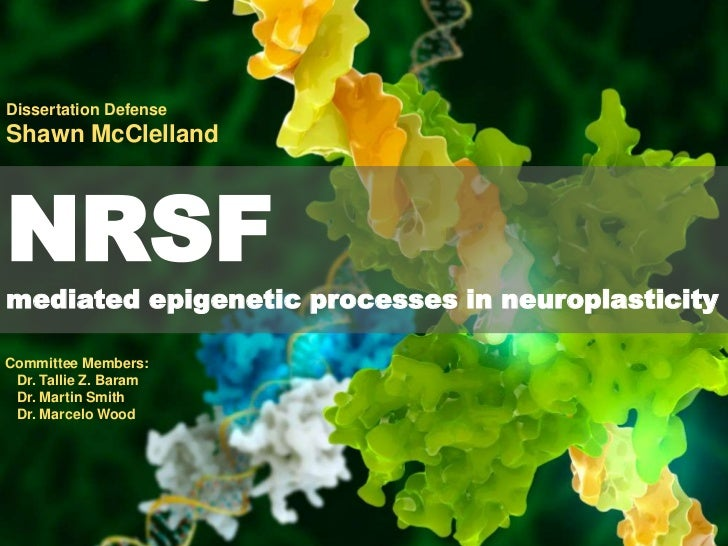 Dissertation Defense<br />Shawn McClelland<br />NRSF<br />mediated epigenetic processes in neuroplasticity<br />Committee ...