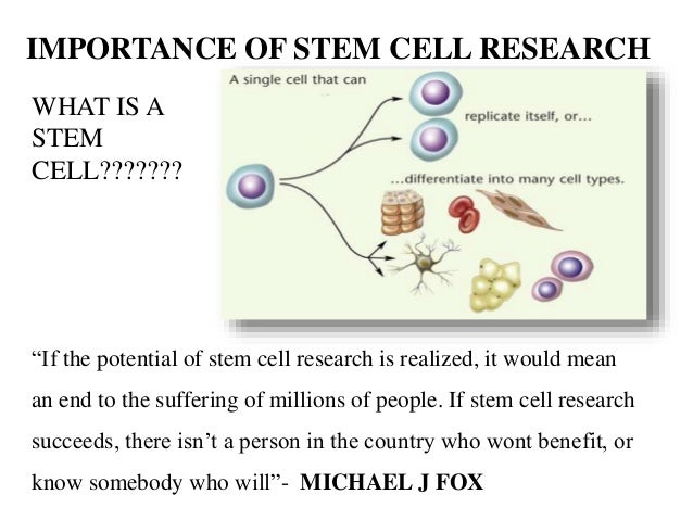 the importance of stem cell research The importance of stem cell research essay examples 1503 words | 7 pages medical research of scientists improves, new treatments are found that enable people to have a longer lifespan and live healthier.