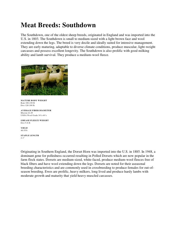 Meat Breeds: Southdown<br />The Southdown, one of the oldest sheep breeds, originated in England and was imported into the...