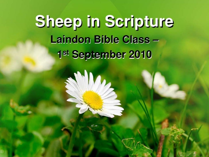 Sheep in Scripture<br />Laindon Bible Class – <br />1st September 2010<br />