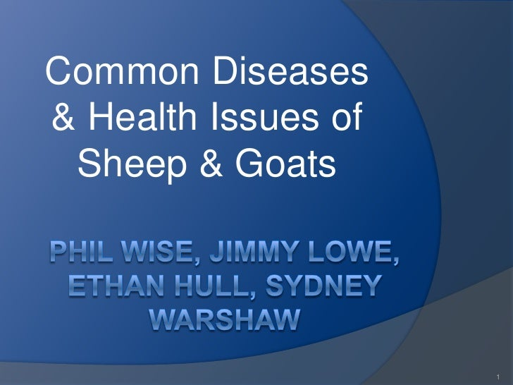 Common Diseases& Health Issues of Sheep & Goats                     1