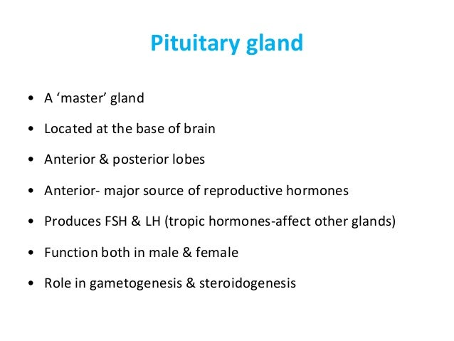 neuro steroidogenesis