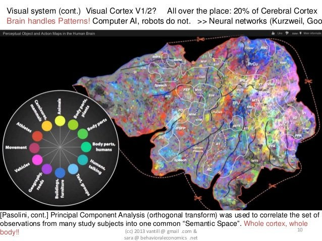 Visual system (cont.) Visual Cortex V1/2? All over the place: 20% of Cerebral Cortex  Brain handles Patterns! Computer AI,...