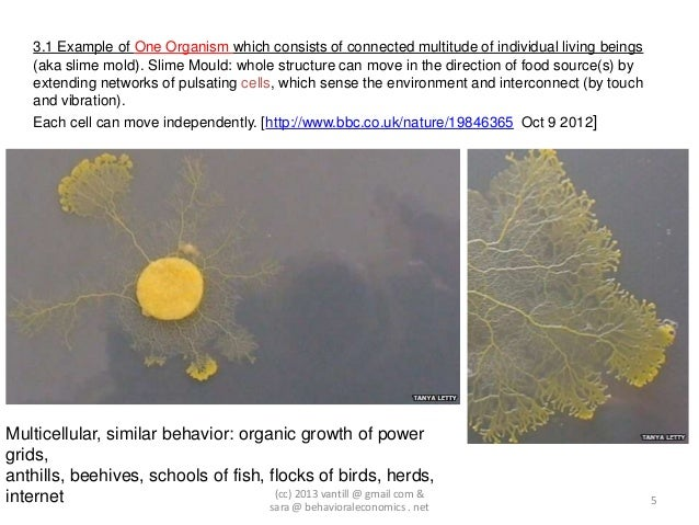 3.1 Example of One Organism which consists of connected multitude of individual living beings    (aka slime mold). Slime M...