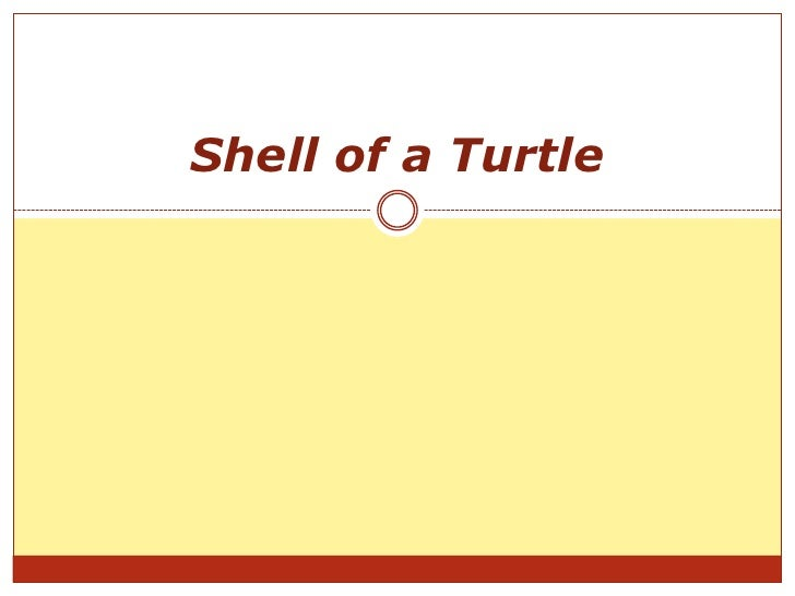 Shell of a Turtle