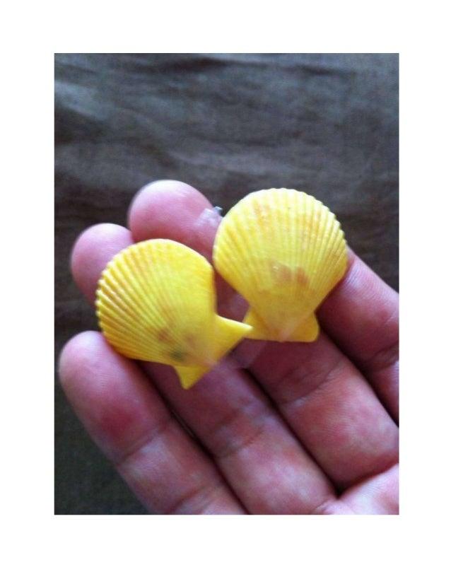 Sample seashells