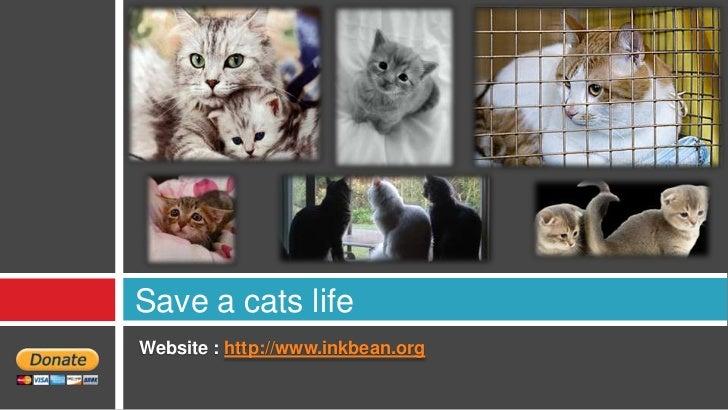 Save a cats lifeWebsite : http://www.inkbean.org