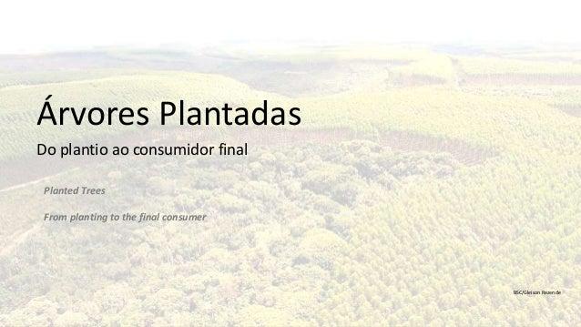 1 Árvores Plantadas Do plantio ao consumidor final BSC/Gleison Rezende Planted Trees From planting to the final consumer