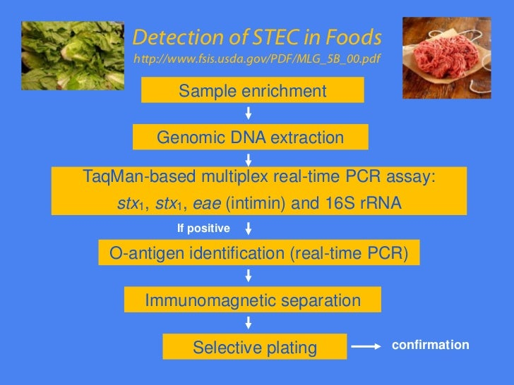 shiga toxin producing e coli o26 Fosfomycin has been the drug of choice for pediatric gastrointestinal infections due to shiga-like toxin-producing escherichia coli (stec) in japan, and the early administration (within 3 days of onset) of fosfomycin is critical for the effective treatment of stec infections.