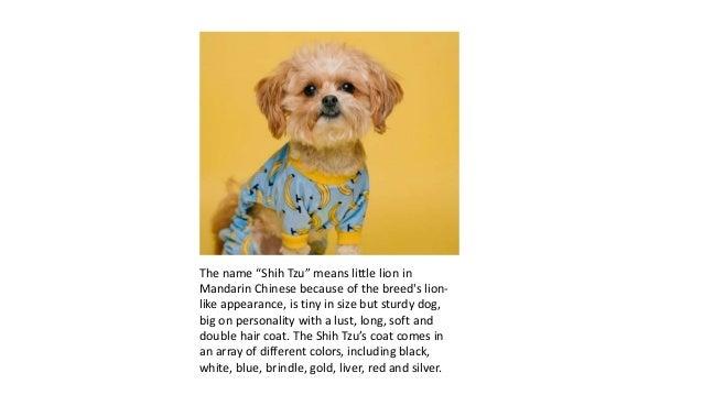8+ Cutest Gifts for Shih Tzu Lovers Slide 2
