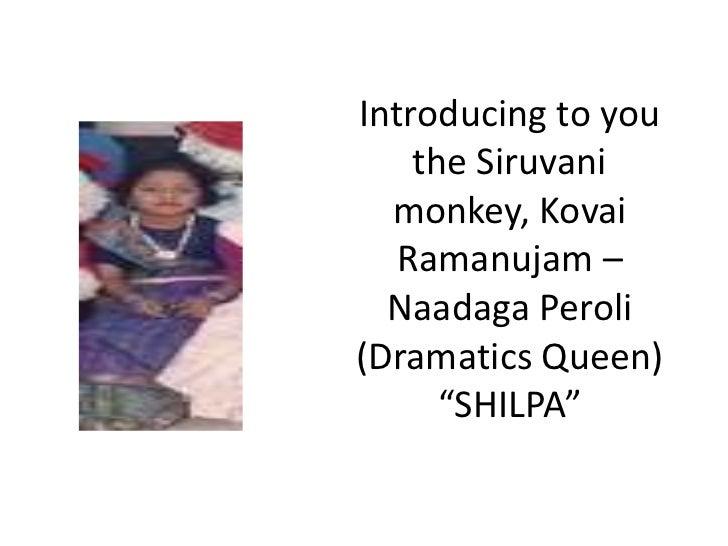 "Introducing to you    the Siruvani  monkey, Kovai  Ramanujam –  Naadaga Peroli(Dramatics Queen)      ""SHILPA"""