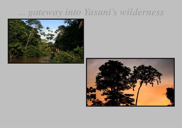 ... gateway into Yasuni's wilderness