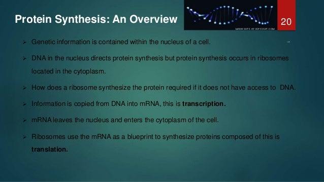Concept of gene and protein synthesis protein synthesis malvernweather Choice Image