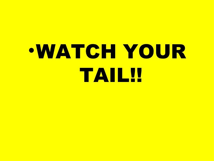 • WATCH YOUR     TAIL!!