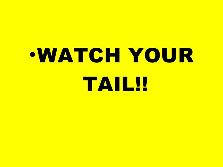 <ul><li>WATCH YOUR TAIL!! </li></ul>