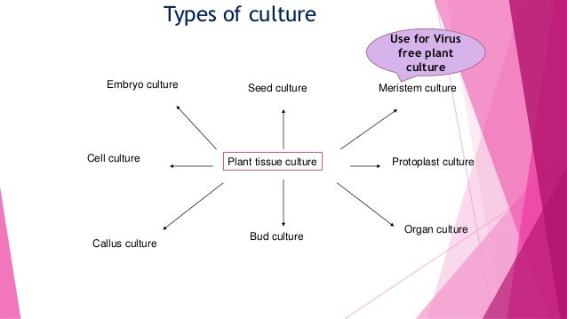 Plant tissue culture diagram