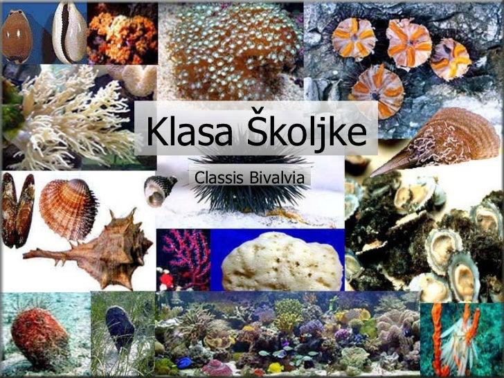 Klasa Školjke Classis Bivalvia