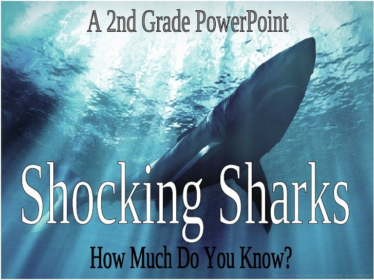 Shocking Sharks A 2nd Grade PowerPoint How Much Do You Know?