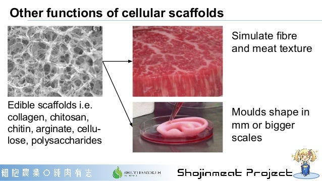 Other functions of cellular scaffolds Edible scaffolds i.e. collagen, chitosan, chitin, arginate, cellu- lose, polysacchar...