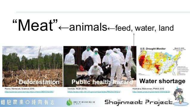 "Deforestation Public health hazard Water shortage ""Meat""←animals←feed, water, land Hoekstra, Mekonnen, PNAS 2012 http://ww..."