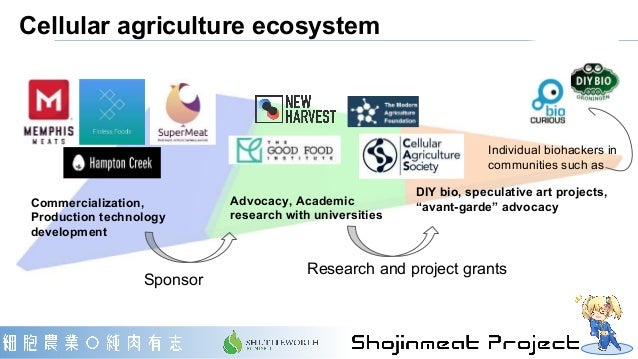 """Cellular agriculture ecosystem Advocacy, Academic research with universities DIY bio, speculative art projects, """"avant-gar..."""