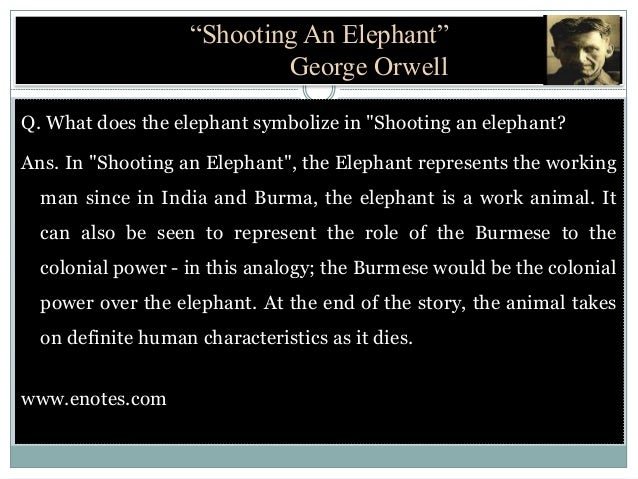 Shooting An Elephant By Is