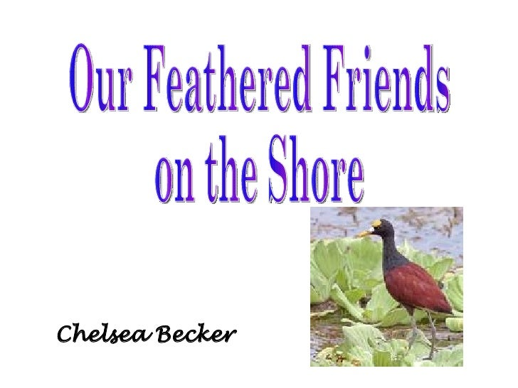 Chelsea Becker Our Feathered Friends on the Shore