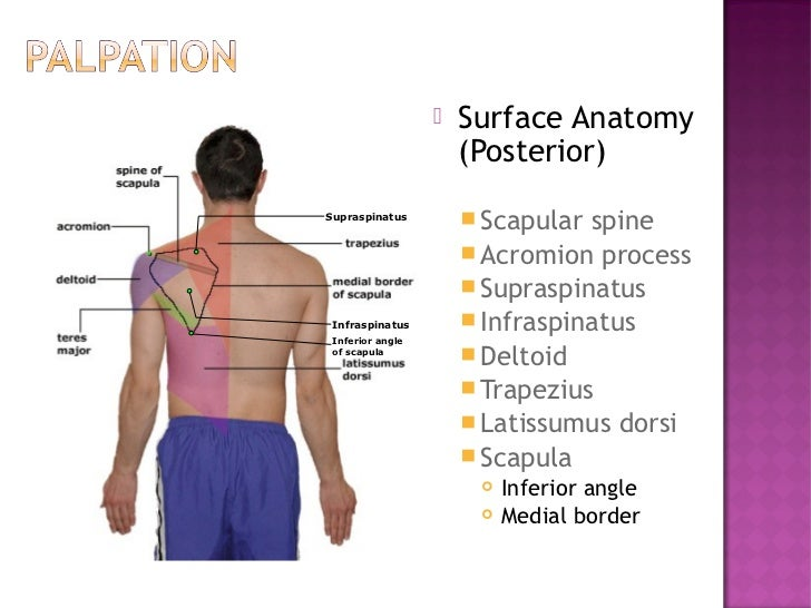 Shoulder examionation