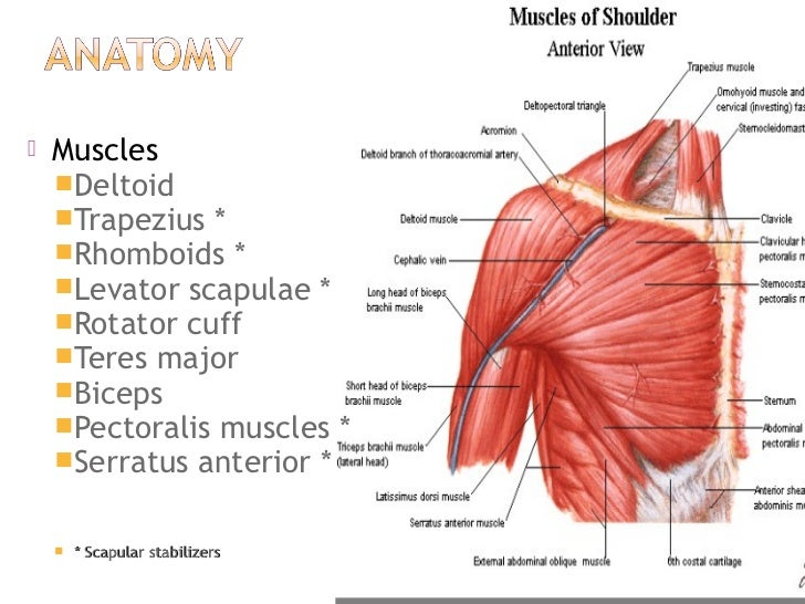 Shoulder examionation