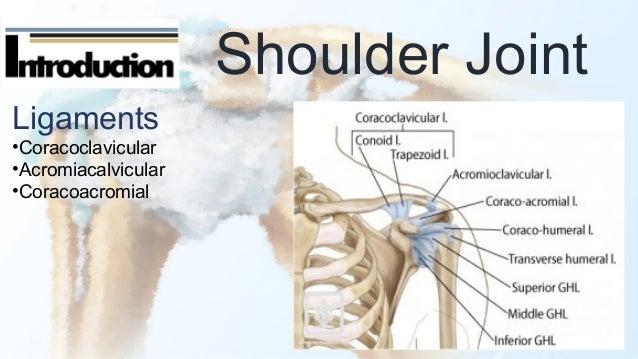 Shoulder fx & dislocation
