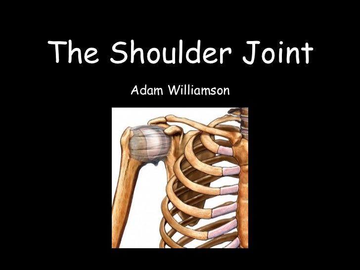 The Shoulder Joint     Adam Williamson