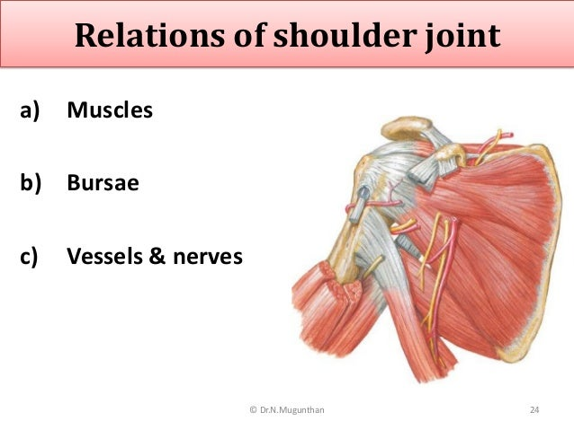 Shoulder Joint -pdf lecture notes Dr.N.Mugunthan.M.S