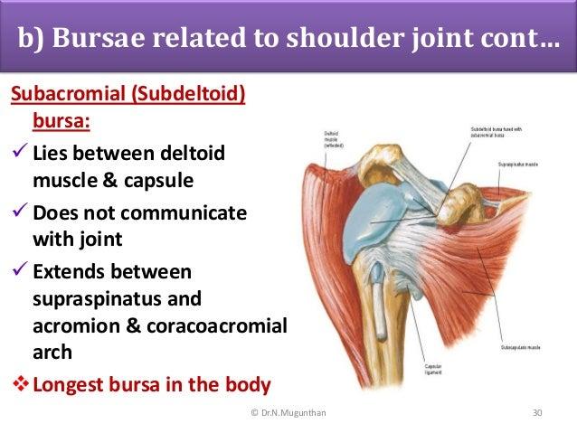 Shoulder Joint -pdf lecture notes Dr.N.Mugunthan.M.S