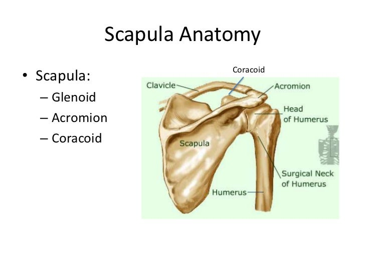 Shoulder radiography