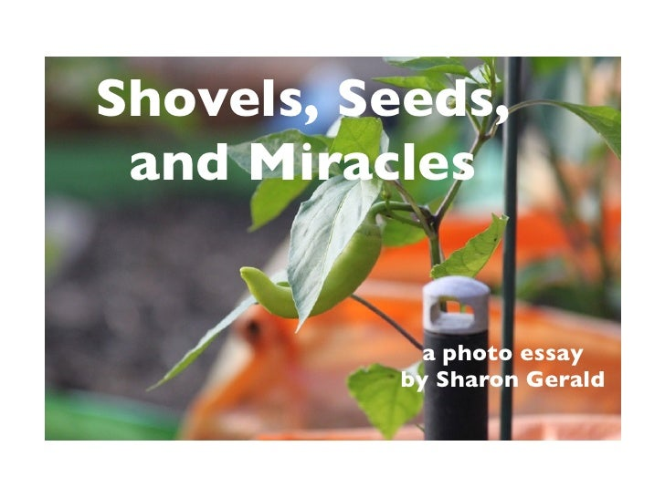 Shovels, Seeds,  and Miracles                a photo essay            by Sharon Gerald