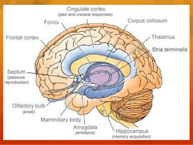 the effects of addiction on brain functioning