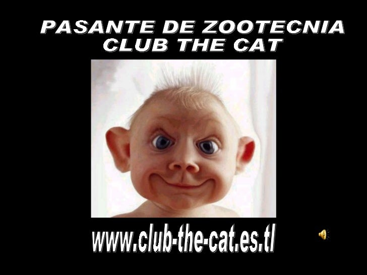 www.club-the-cat.es.tl PASANTE DE ZOOTECNIA CLUB THE CAT