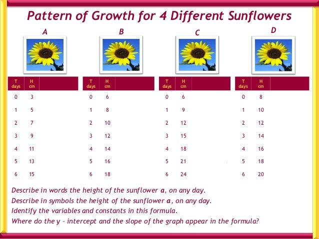 Pattern of Growth for 4 Different Sunflowers            A                         B                         C             ...