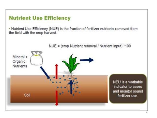 efficient use of fertilizers Efficient fertilizer placement in no-till if growers want to use variable rate fertilizer banding fertilizer at planting is the most efficient and.