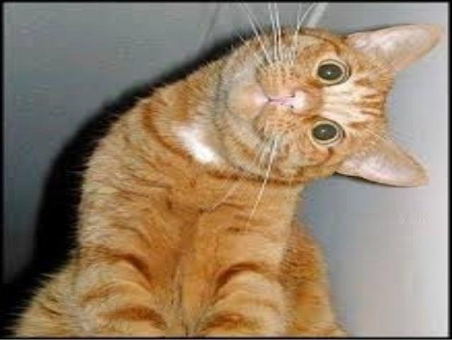 royal canin urinary so cat