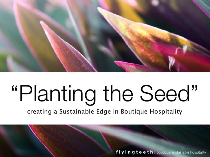 """""""Planting the Seed""""  creating a Sustainable Edge in Boutique Hospitality                                   flyingteeth   b..."""