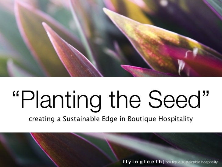 """Planting the Seed""  creating a Sustainable Edge in Boutique Hospitality                                   flyingteeth   b..."