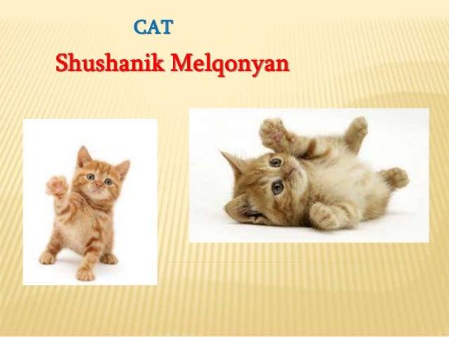 CAT Shushanik Melqonyan